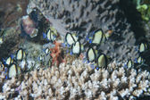 Hard coral macro detail from Raja Ampat — Stock Photo