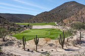 Desert golf course green — Stock Photo