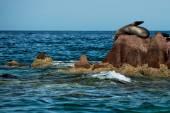 морской лев уплотнения расслабляющий — Стоковое фото