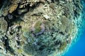 Clown fish in anemone  — Stock Photo