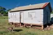 Hovel, shanty, shack in Tonga, Polynesia — Stock Photo
