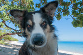 Dog portrait on tropical crystal polynesian sea background — Stock Photo