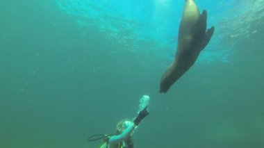Sea lion seal underwater — Wideo stockowe