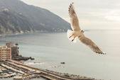 Seagull flying over Camogli — Fotografia Stock