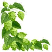 Branch of hops — Stock Vector