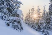 Winter's tale — Stock Photo