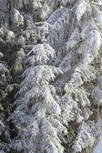 Winter's tale — Stockfoto