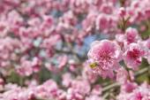 Spring — Stock fotografie