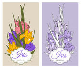 Iris flowers — Stock Vector