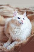Gorgeous white cat — Stock Photo