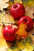 Autumn red apples and fallen yellow leaves in golden light — Stock Photo