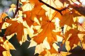 Beautiful autumn season - golden leaves — Stock Photo