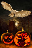Halloween - Spooky Pumpkins - Owl — Stock Photo
