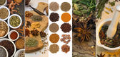 Cooking Spices - Flavoring and Seasoning — Stock Photo