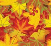 Autumn maple and ashberry background — Stock Vector