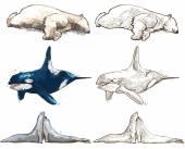 Polar animals - coloring book — Stockvektor