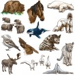 Animals around the world (set no.11) - Hand drawn illustrations — Stock Photo #59323965