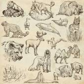 Animals around the world (set no.10) - Hand drawn illustrations — Stockfoto