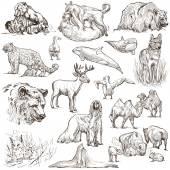 Animals around the world (set no.10) - Hand drawn illustrations — Stock Photo