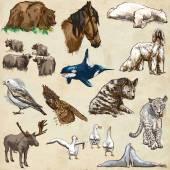 Animals around the world (set no.11) - Hand drawn illustrations — Stock Photo