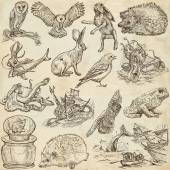 Animals around the world (set no.9) - Hand drawn illustrations — Stock Photo