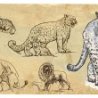 Animals, theme: BIG CATS - hand drawn vector pack — Stock Vector #59323911