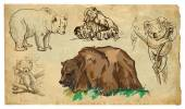 Animals, theme: BEARS - hand drawn vector pack — Stock Vector