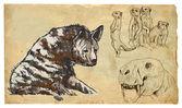 Animals, theme: FELIFORMIA - an hand drawn vector pack — Stock Vector