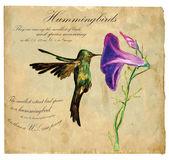 Hand painted illustration (vector), Bird: Hummingbird — Stock Vector