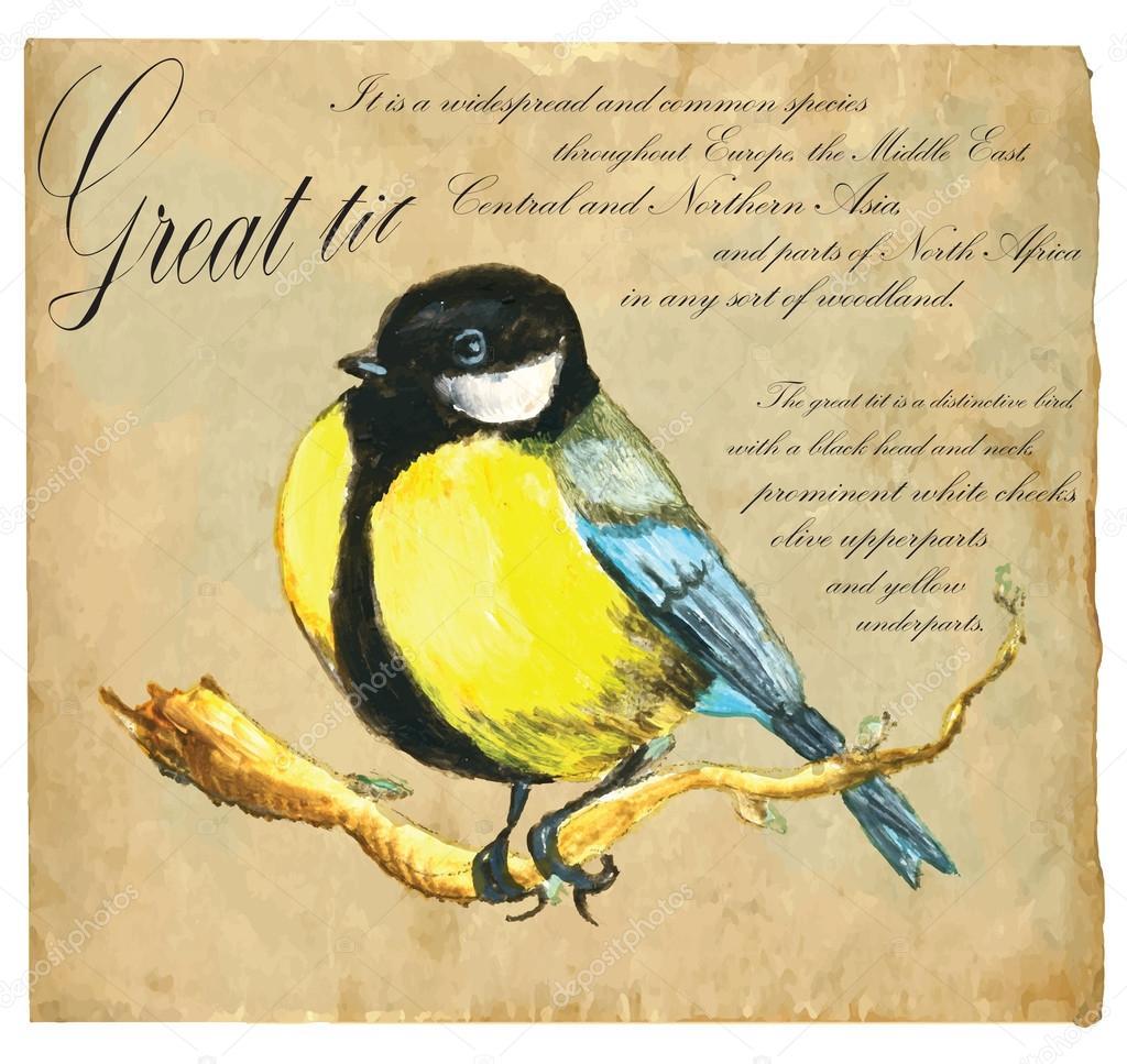 手绘插画成矢量图片.鸟: 山雀– 图库插图