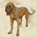 Great Dane (German Mastiff) — Stock Photo #62446087