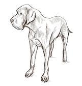 Great Dane (German Mastiff) — Foto Stock