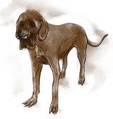 Great Dane (German Mastiff) — Stok fotoğraf