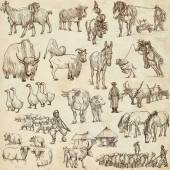 Farm animals. Full sized hand drawn illustrations. — Stock Photo