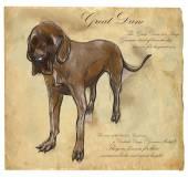 Great Dane (German Mastiff) - An hand drawn vector illustration — Stok Vektör