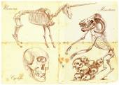 An hand drawn vector: Unicorn, Cyclops, Minotaur — Stock Vector