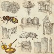 Bees, beekeeping and honey - hand drawn illustrations — Stock Photo #66847273