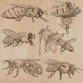 Bees, beekeeping and honey - hand drawn vector pack 3 — Stock Vector