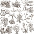 Flowers, Trees, Plants - An hand drawn pack. Originals. — Stock Photo #69433461