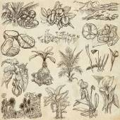 Flowers, Trees, Plants - An hand drawn pack. Originals. — Stock Photo