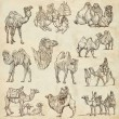 Camels - An hand drawn pack. Originals — Stock Photo #70748253