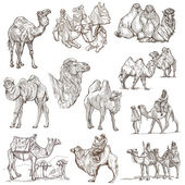 Camels - An hand drawn pack. Originals — Stock Photo
