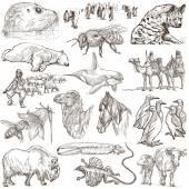 Animals - Freehand sketches on white — Stock Photo
