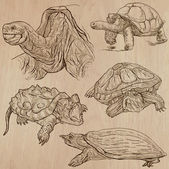 Turtles - An hand drawn vector pack — Stock Vector