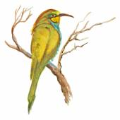 An hand painted illustration on white - Bird, European bee-eater — Stock Photo