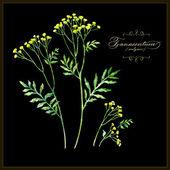 Botanical flowers illustration. — 图库矢量图片