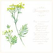 Βοτανική λουλούδια εικονογράφηση — Διανυσματικό Αρχείο