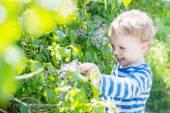 Happy Toddler boy plucks flowers — Stock Photo