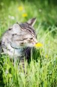 Cute kitten in grass smelling flower — Stock Photo