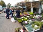 Vrouw kopen seizoensgebonden bloemen op een Belgische markt. — Stockfoto